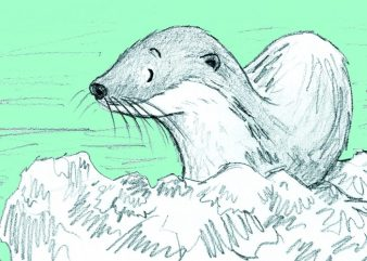 Otter.Turquoise